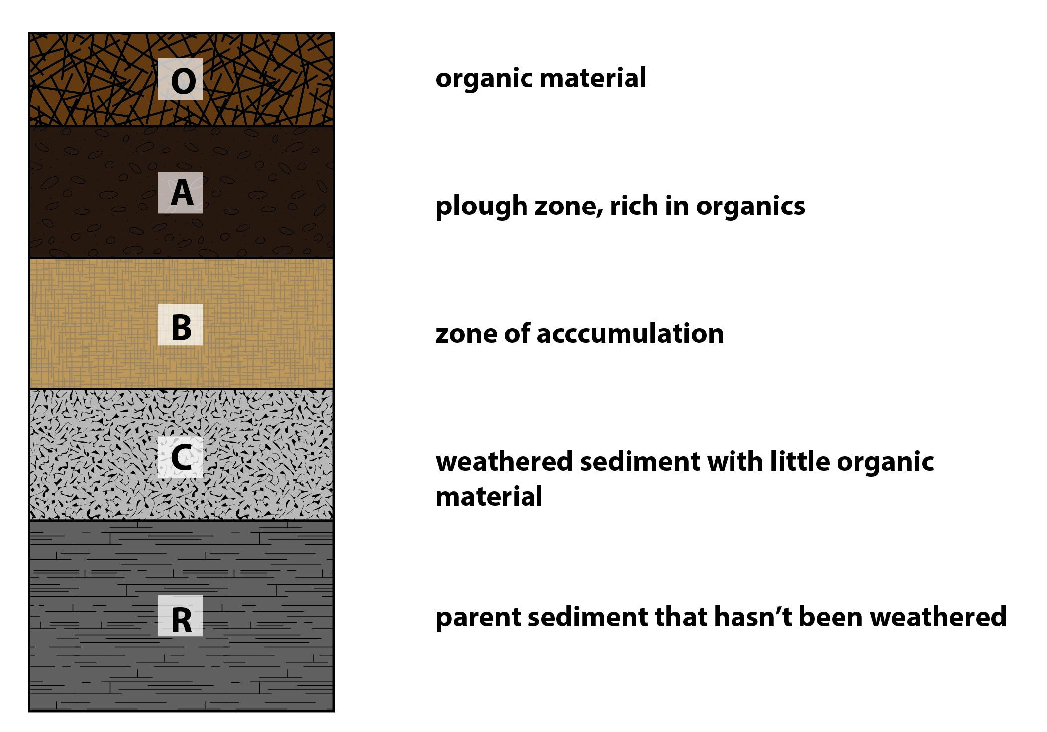 Soil horizons answers 01