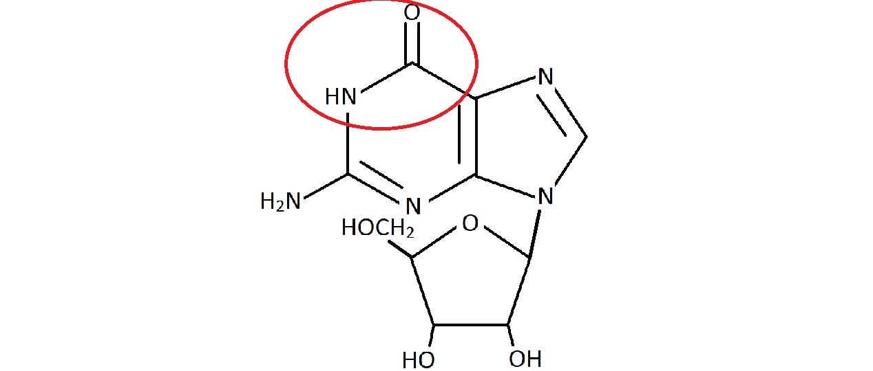Guanosine answer