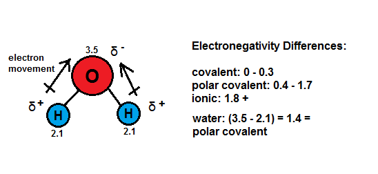 Water   electronegativity